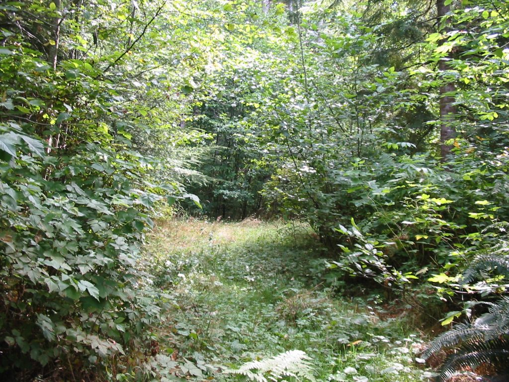 The Sacred Grove of the Hooded Ones